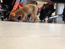 Friday at the office: Maya comes to play!