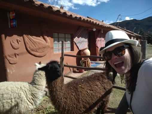 Look! A llama and alpaca selfie in one!