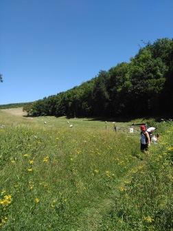 Wandering fields near Arundel